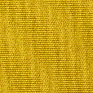 Soft-Mustard-Flower-554